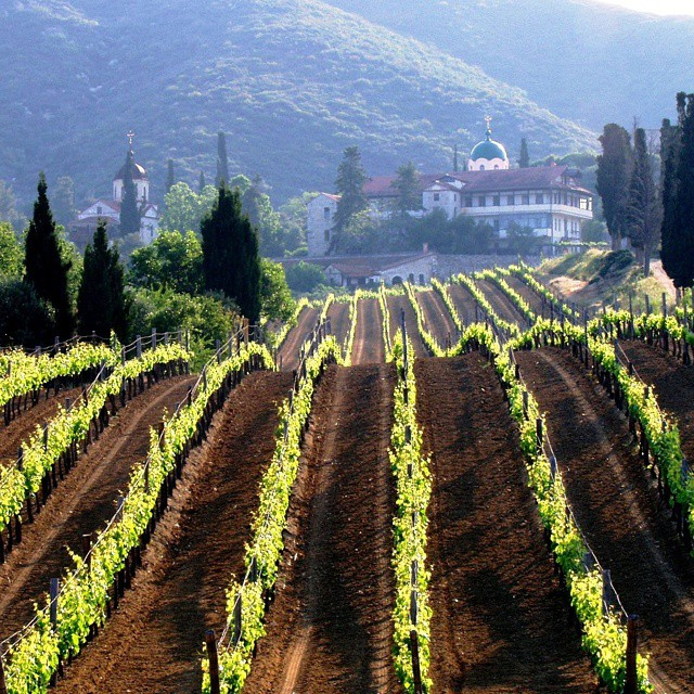 Some vineyards are destined to stand out. Like the blessed land of Mount Athos. Spirituality and pure beauty. The Domaine Metochi Chromitsa was discovered in 1969 by Evangelos Tsantalis. Since then huge investment has turned it into a Tsantali family masterpiece  #MtAthos #metochi #metoxi #chromitsa #monastic #athonite #greece #greekvines #greekgrapes #drinkGreek #eco #nature #beauty #bliss #wow #secluded #pure #winelover #winerist #spiritual #unique #mesmerizing