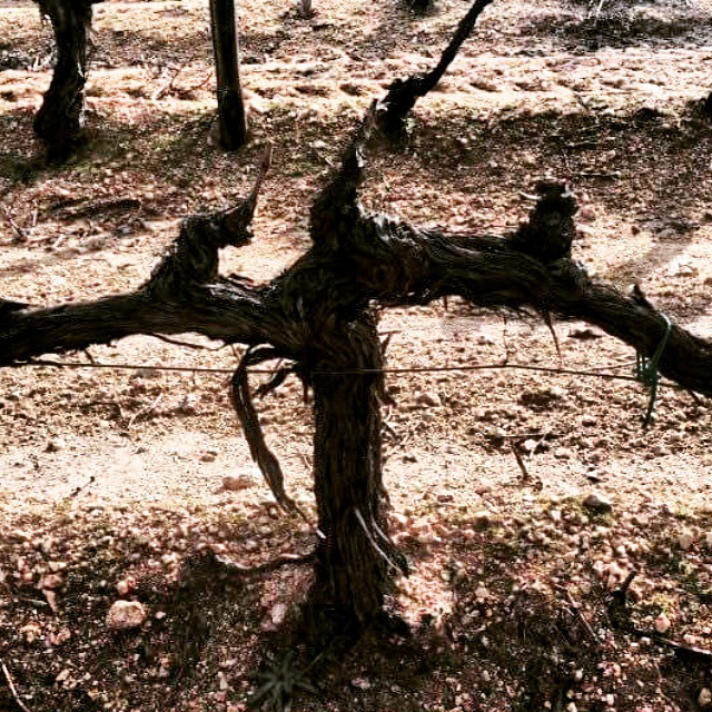 Election day in Greece. Left or right, right or left, may the day after be fruitful.  #electionday #greece #hope #passion #greekvine #symbolism