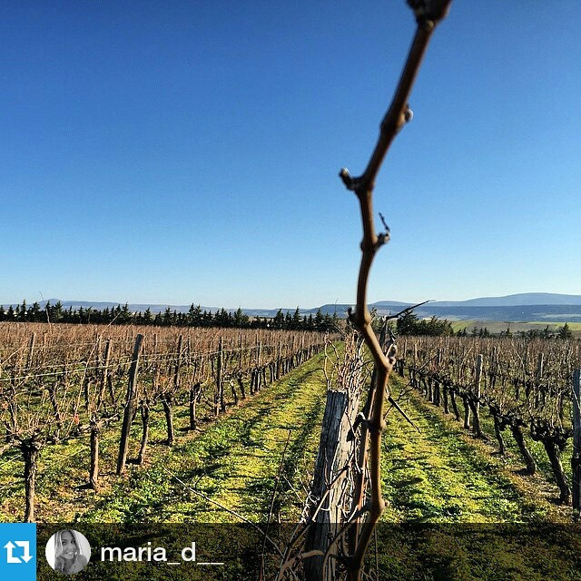 The snowy week is over.  #Repost @maria_d__ ・・・ back to the #vineyard  #halkidiki #greece #nature #cycle #bliss #green #organic #winter #vineyard #vines #greekvines #passion #ourwork #drinkgreek