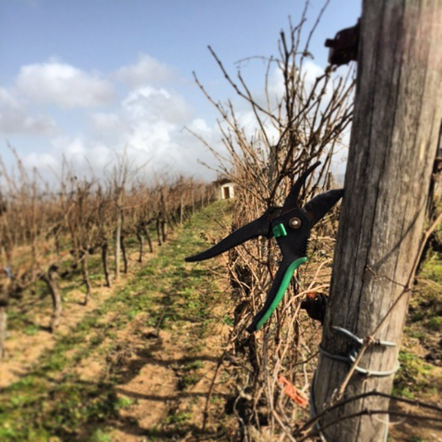 Pruning time. #wineexperience #Halkidiki #northgreece #Greece #drinkGreek #greekvines #greekwine #vines #vineyard #pruning #work #passion #nature #cycle #winter #bliss #winelover #care