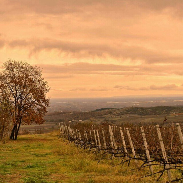 Manic Monday? Think of a beautiful winter sunset  #winelover #naoussa #greekvines #monday #beauty #winter #sunset #vines #nature #magic #xinomavro #dreamy #serenity #stateofmind #greekgrapes #drinkGreek #piece