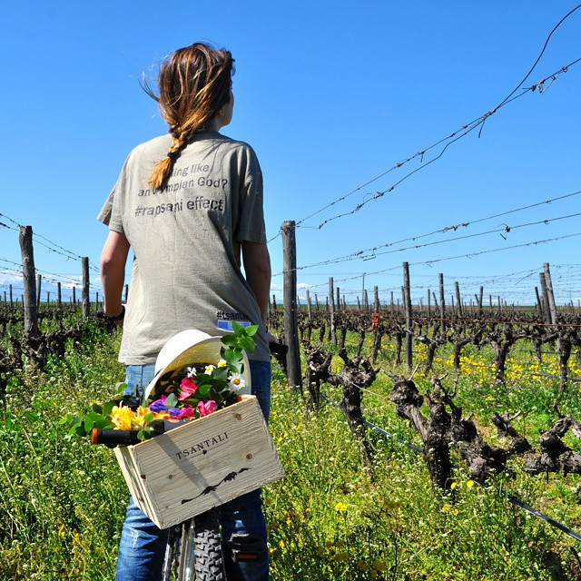 Looking for the Easter Bunny.  #easter #vineyard #Rapsani #nature #drinkGreek #greekvines #bliss  #greekgrapes #beauty #spring #flower #winelover #wine #share #inmyglass #wineisfun #winerist