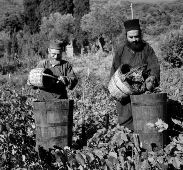 Mt Athos General Archive kutlumusiou-grape-harvest-19502